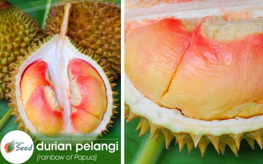2-Durian-Pelangi-min